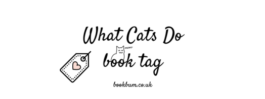 BLOG TAG - what cats do